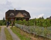 winobranie-2013-374
